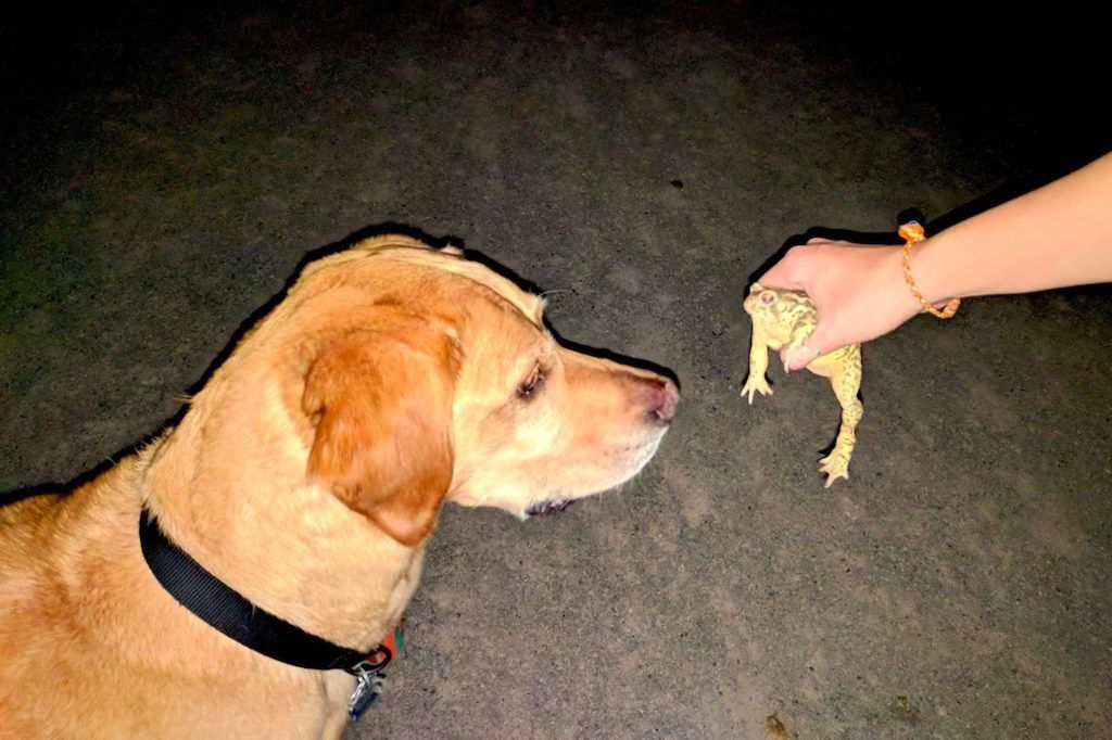 A dog looks curiously at a frog being held up to his face