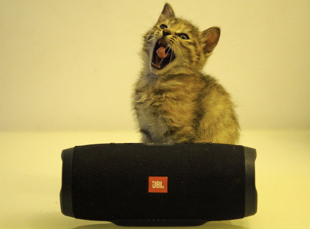 A kitten yawning behind the JBL Charge 3 Speaker