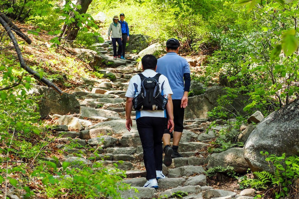 Two hikers climbing up, and two hikers climbing down, a set of stairs in a forest