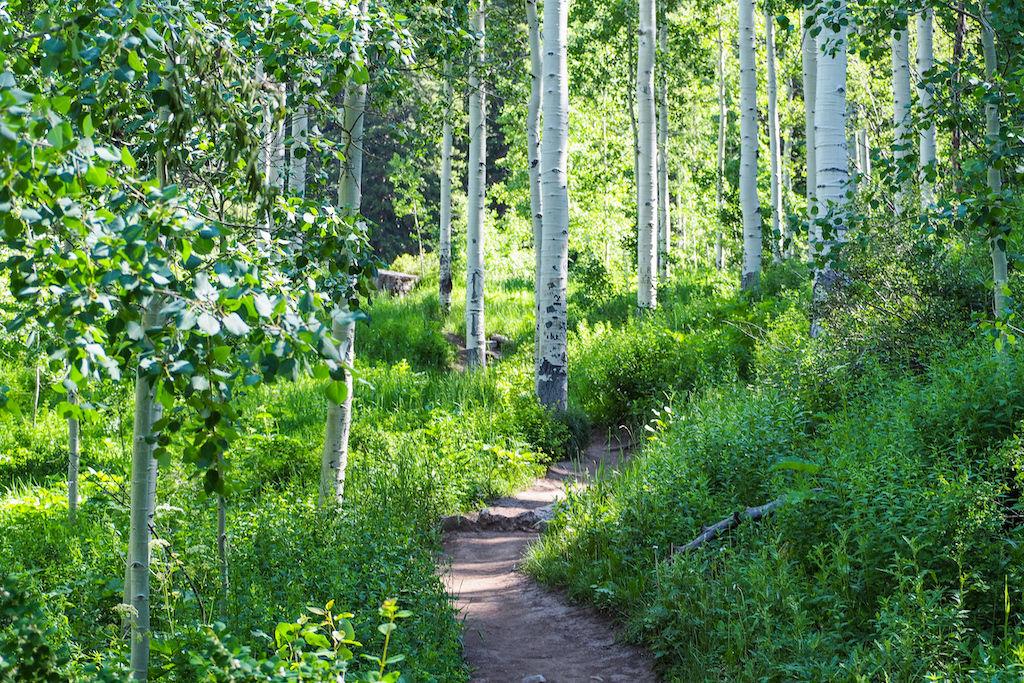 Aspen trees near the Booth Falls Trailhead