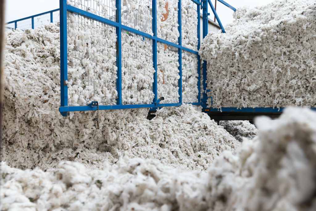 Mass raw cotton in pre-production
